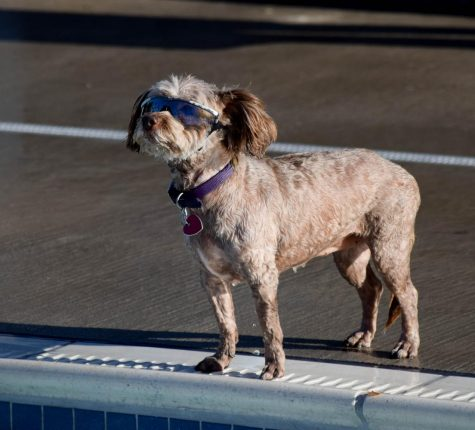 The Mission Pool Dog Day